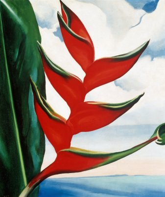 Heliconia, Crab's Claw Ginger